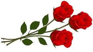 GJV-røde roser