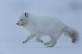 HAM-Svalbardrev_O02A4089